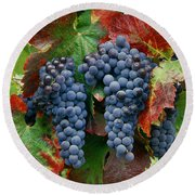 5b6374-cabernet Sauvignon Grapes At Harvest Round Beach Towel