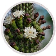 Cacti Bouquet  Round Beach Towel