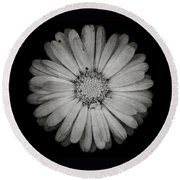 Calendula Flower - Textured Version Round Beach Towel