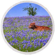 Round Beach Towel featuring the photograph Calf Nestled In Bluebonnets - Texas Wildflowers Landscape Cow by Jon Holiday