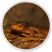 California Newt Round Beach Towel by Ron Sanford