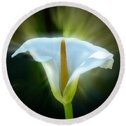 Calla Lily Round Beach Towel by Frank Bright