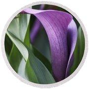 Calla Lily In Purple Ombre Round Beach Towel
