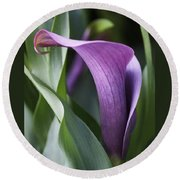 Calla Lily In Purple Ombre Round Beach Towel