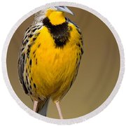 Calling Eastern Meadowlark Round Beach Towel by Jerry Fornarotto