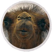 Camel In The Gobi- Mongolia Round Beach Towel