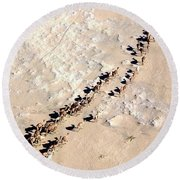 Camels Walking In Desert Round Beach Towel