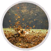 Round Beach Towel featuring the photograph Can You See Me? by Carol Lynn Coronios
