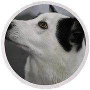 Canaan Dog Round Beach Towel