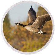 Round Beach Towel featuring the photograph Canada Goose In The Skies  by Bryan Keil