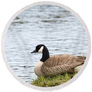 Round Beach Towel featuring the photograph Canada Goose by Michael Chatt