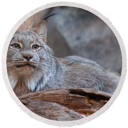 Round Beach Towel featuring the photograph Canada Lynx by Bianca Nadeau