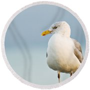 Cape Cod Seagull Round Beach Towel