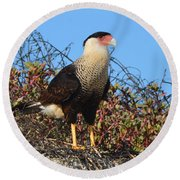 Round Beach Towel featuring the photograph Caracara In The Dunes by Debra Martz