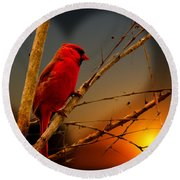 Cardinal At Sunset Valentine Round Beach Towel
