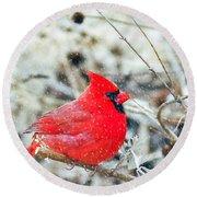 Cardinal Bird Christmas Card Round Beach Towel