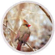 Round Beach Towel featuring the photograph Cardinal Birds Female by Peggy Franz