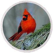 Cardinal In An Evergreen Round Beach Towel