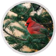 Cardinal In Balsam Round Beach Towel