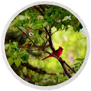 Cardinal In Dogwood Round Beach Towel