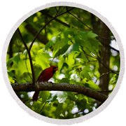 Cardinal In The Trees Round Beach Towel