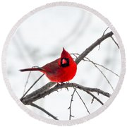 Cardinal On A Branch  Round Beach Towel by Mary Carol Story
