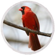 Cardinal On Branch Round Beach Towel