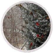 Cardinals In Winter 1 Square Round Beach Towel