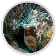Round Beach Towel featuring the photograph Caribbean Reef Octopus Next To Green Anemone by Amy McDaniel