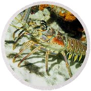 Round Beach Towel featuring the photograph Caribbean Spiny Reef Lobster  by Amy McDaniel