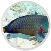 Round Beach Towel featuring the photograph Caribbean Stoplight Parrot Fish In Rainbow Colors by Amy McDaniel