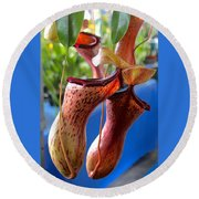 Carnivorous Pitcher Plants Round Beach Towel by Venetia Featherstone-Witty
