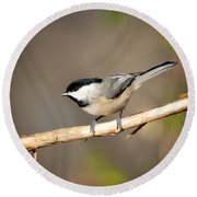 Round Beach Towel featuring the photograph Carolina Chickadee  by Kerri Farley