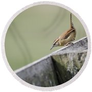 Carolina Wren Two Round Beach Towel