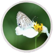 Round Beach Towel featuring the photograph Cassius Blue On Wildflower by Greg Allore