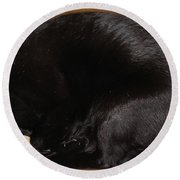 Round Beach Towel featuring the photograph Cat In The Box by Kerri Mortenson