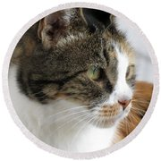 Round Beach Towel featuring the photograph Cat by Laurel Powell