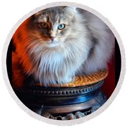 Round Beach Towel featuring the photograph Cat On A Pedestal by Susanne Still