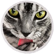 Round Beach Towel featuring the photograph Cat by Paul Fearn