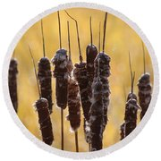 Cat Tails In November Round Beach Towel