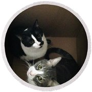 Tabby Cat Kitten Photography Pets  Round Beach Towel
