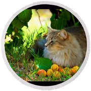 Round Beach Towel featuring the photograph Cat's Mountain Summer by Susanne Still