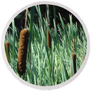 Round Beach Towel featuring the photograph Cattails A Plenty by Michael Porchik