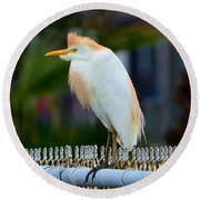 Round Beach Towel featuring the photograph Cattle Egret Breeding Plumage by Debra Martz