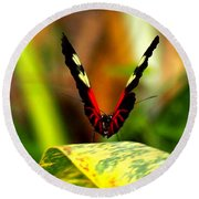 Round Beach Towel featuring the photograph Cattleheart Butterfly  by Amy McDaniel
