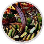 Round Beach Towel featuring the photograph Caught In A Cactus Patch-sold by Antonia Citrino