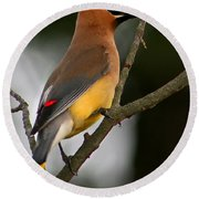 Cedar Wax Wing II Round Beach Towel by Roger Becker