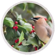 Cedar Waxwing In Holly Tree Round Beach Towel