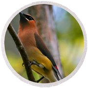 Cedar Wax Wing Round Beach Towel by Roger Becker