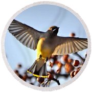 Cedar Waxwing Flight Round Beach Towel